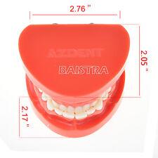 New Dental Teach Study Adult Standard Typodont Demonstration Teeth Model  UK
