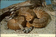 Red Diamond Rattlesnake ~ San Diego Zoo ~ California ~ vintage postcard