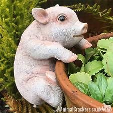More details for piglet pot pal hanger novelty resin garden ornament decoration pig lover gift