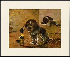 GERMAN WIREHAIRED POINTER PUPPY AND DUCK LOVELY DOG PRINT MOUNTED READY TO FRAME