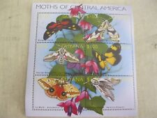 Guyana butterflies moths of Central America insects I201802