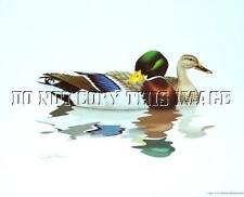New Gallery Release Print Pair Mallard Ducks By Artist Richard Sloan