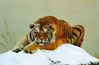 """Fine Oil painting wild animal wildlife yellow tiger in winter snow canvas 36"""""""