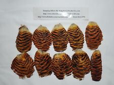 New Golden Pheasant Head Tippet  Feather(10Pcs) For Fly Tying