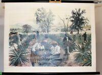 Schulwandkarte Rollkarte Lehrtafel Ananas Ernte Plantage Esselte Olle Haghahl