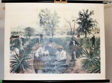 Stich Erdmandel Ananas Bambus Reis Mango Avacado Kichererbse 1890 Original