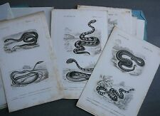 Reptiles. Dictionnaire Histoire Naturelle. D.Orbigny. 19 planches. E.O. 1846.