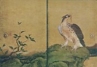 Japon - Kyoto - Nijo Castle - Ohiroma Fourth Chamber, Painting of Hawks