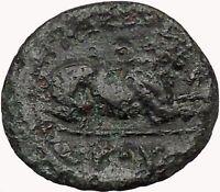 KASSANDER killer of Alexander the Great son Ancient  Greek Coin Lion  i43361