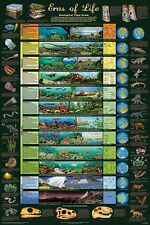 The Eras of Life Educational Science Teacher Classroom Chart Poster 24x36