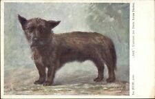 Scottish or Cairn Terrier c1910 Postcard
