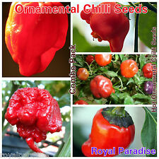 30 Seeds Mixed Ornamental Chilli Pepper Seeds Sweet Hot Chili Mixed Seed Pack #1