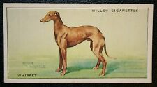 WHIPPET      Original 1930's Vintage Coloured Card  VGC