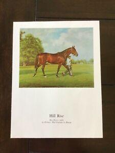HILL RISE photo Horse Racing 1964 Santa Anita Derby