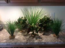 Aquarium Plant w/Stone Base Large Display Also Good inReptile Terrarium