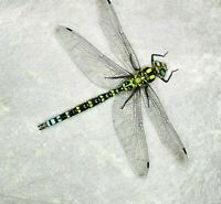 Dragonfly Cross Stitch Diamond Painting Kit Embroidery Rhinestone Home Decor Art