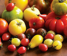 HEIRLOOM TOMATO MIX VEGETABLE GARDEN VARIETY POT PATIO 160 SEED PACK