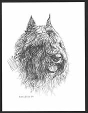 #329 Bouvier des Flandres dog art print Pen and ink drawing by Jan Jellins