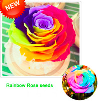 Rainbow Rose Bonsai Rare Potted Flowers Plants Garden Perennials 100 PCS Seeds M