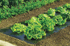 Biodegradeable Weed Control Mulch Film allotments veg patch borders 20m x 1.5m