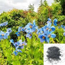 50 blaue Himalajamohnblume tibetische Meconopsis Betonicifolia Blumensamen