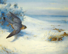 Archibald Thorburn  Merlin And Larks 1923   Wall Art  Canvas