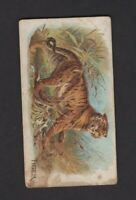 1890 Allen & Ginter N21 Quadrupeds Tiger