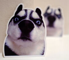 "Are You Serious Husky dog Lover Fisheye Lens Clip art 2x3"" Decal sticker #4570"