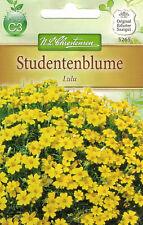 5265 Studentenblume 'Lulu' Tagetes tenuifolia hellgelb kleinblütig  Samen