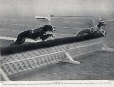 GREYHOUND RACING AT WEMBLEY STADIUM OLD ORIGINAL 1934 DOG PRINT
