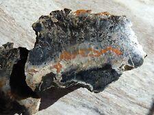 2 Halves - Utah Petrified Wood *Polished* Black Red/Orange * 1 pound 3 oz.
