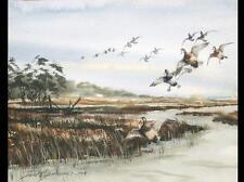 Watercolor of bluebill landing in marsh, David Hagerbaumer. Lot 198B