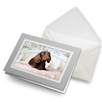 Greetings Card (Grey) - Pampered Dachshund Puppy Dog  #21440