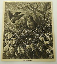 1881 magazine engraving ~ MALE AND FEMALE BIRDS return to pillaged nest and eggs