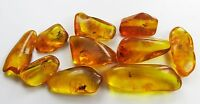 LOT of 10 pieces Genuine BALTIC AMBER stones with Fossils Insects Inclusions