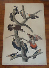 The Birds of America. Audubon. Woodpecker. Havell. 1838.