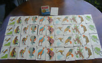 Vtg Whitman Animal Rummy Card Game In Orig Box Complete