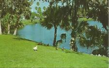 ag(V) Picturesque Orange Lake in Downtown New Port Richey, Florida