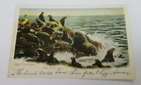 1905 SEAL ROCKS San Francisco CLIFF HOUSE VIEW CA to Mount Vernon NY Postcard