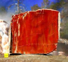 More details for petrified fossilised wood slice - arizona rainbow fossil prehistoric tree 928g