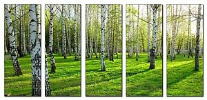 Spring Forest Trees on Canvas Wall Art 5 Panel Print Framed and Ready to Hang