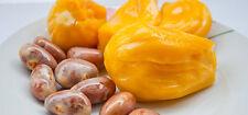 20Jackfruit Seeds - Fresh - jack fruit - tropical miracle fruit