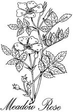 Unmounted Rubber Stamp, Floral Stamps, Wildflower, Flowers, Roses, Meadow Rose