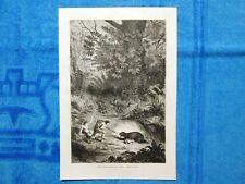 Gravure Année 1861 - Famille indienne attaquée par un jaguar - Indiani attaccati
