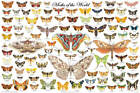Moths of the World Educational Poster 36x24