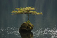 """perfect 36x24 oil painting handpainted on canvas """"Lone Tree In Fairy Lake""""@N4191"""
