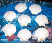 EIGHT (8) IRISH DEEP SCALLOP SEA SHELLS BEACH  DECOR NAUTICAL CRAFT TROPICAL