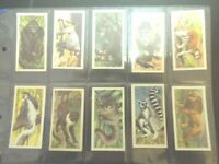 1962  Brooke Bond Tea AFRICAN WILD LIFE  Lions Africa Trading  Set of 50 cards s