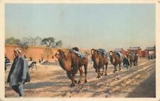 CAMEL TRAIN PEKING CHINA POSTCARD (c. 1920)