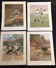 LYNN BOGUE HUNT Lot Of 15 Fifteen 1944 Bird Prints Field And Stream